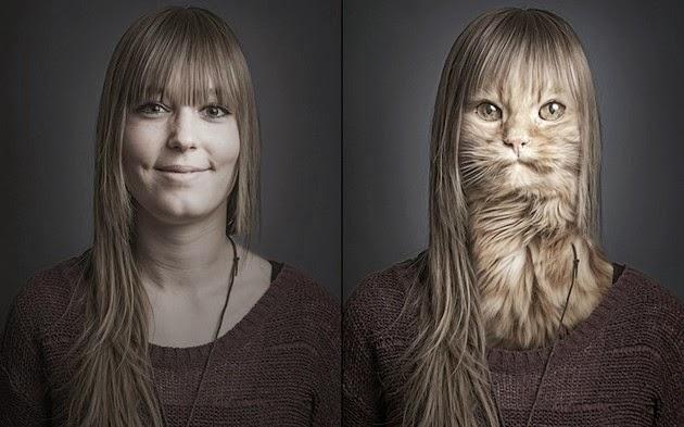 Transplants-Cats-Faces-1
