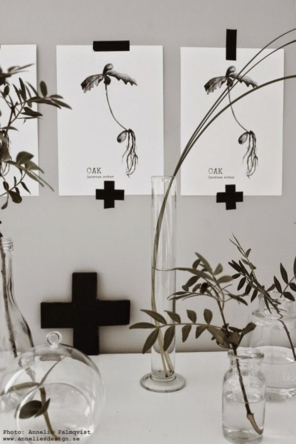 diy kors, gör det själv, tavlor med ekollon, svartvita prints, svart och vitt, svartvit, svart washitejp, oak tavlor, kors, grön växt, gröna växter, grå vägg, glaskupa för kvist, kvistar av gröna blad,
