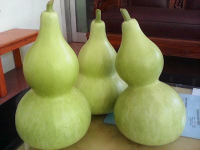 Labu Botol, Hasil Panen Kebun PKK RW 03