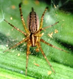 foto gambar laba-laba di atas daun