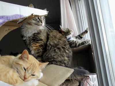 Cat tree climbers
