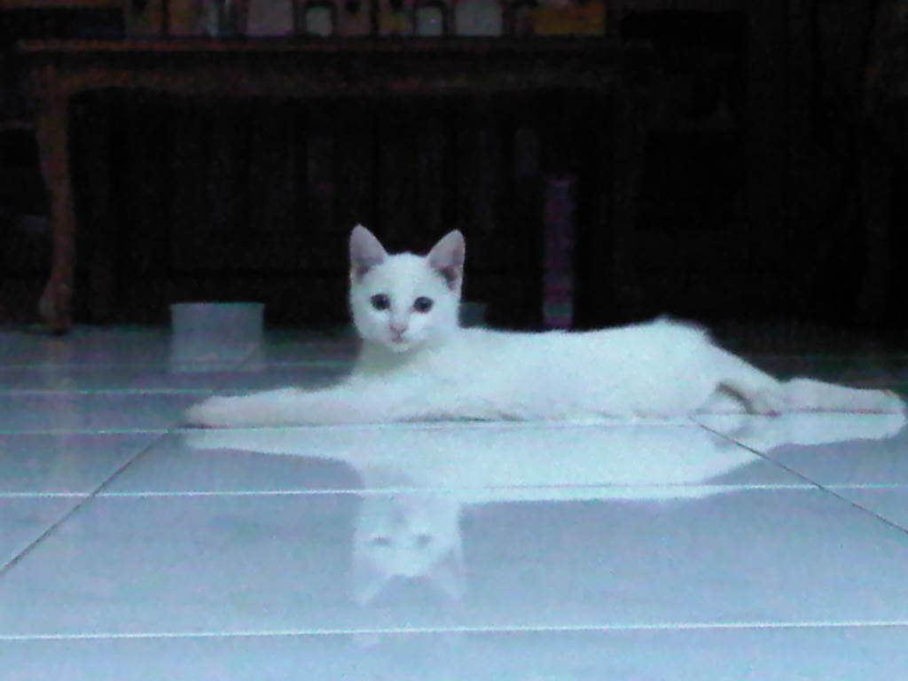 Chesarina S Blog Pecinta Kucing
