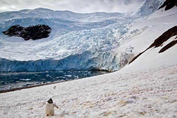 But they didn't run away. - He Was Taking Photos Of A Glacier In Antarctica When Suddenly, Out Of Nowhere… WHOA!