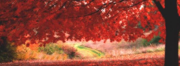 facebook sonbahar kapak resimleri+%252817%2529 Facebook Zaman Tüneli Sonbahar Manzara Kapak Resimleri