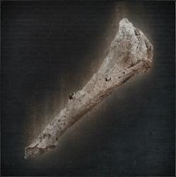 Old Hunter Bone