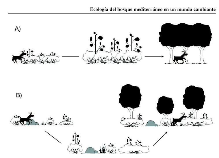 Les interaccions al Bosc Mediterrani