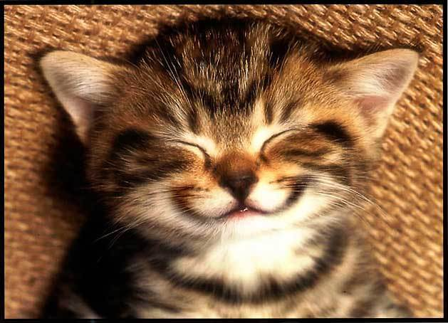 smiling cat