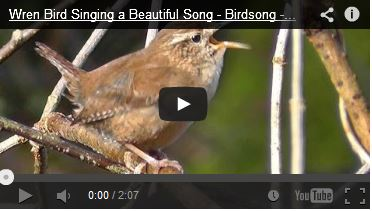 http://kimedia.blogspot.com/2014/07/message-from-wren-bird-video.html