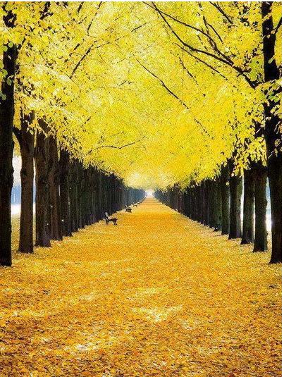 Прислів'я, приказки та народні прикмети про пори року  Осінь