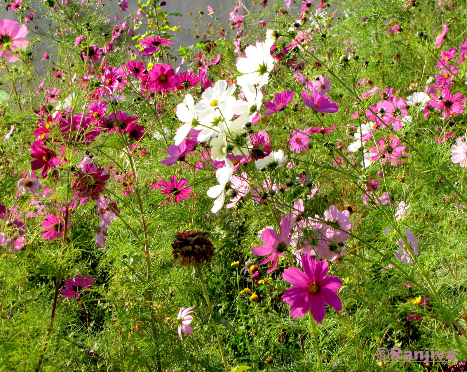 Des fleurs champ tres et le printemps paysages et fleurs au fil de l 39 eau - Ou acheter le tapis champ de fleurs ...