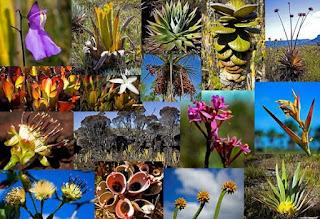 Pengertian asas keanekaragaman hayati