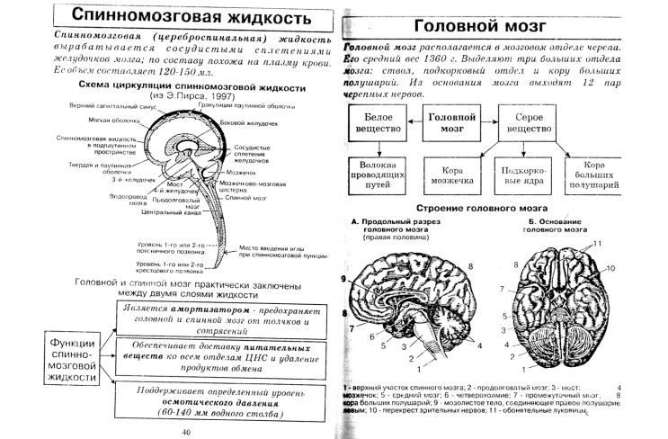 его строение и шпаргалка функции мозг головной