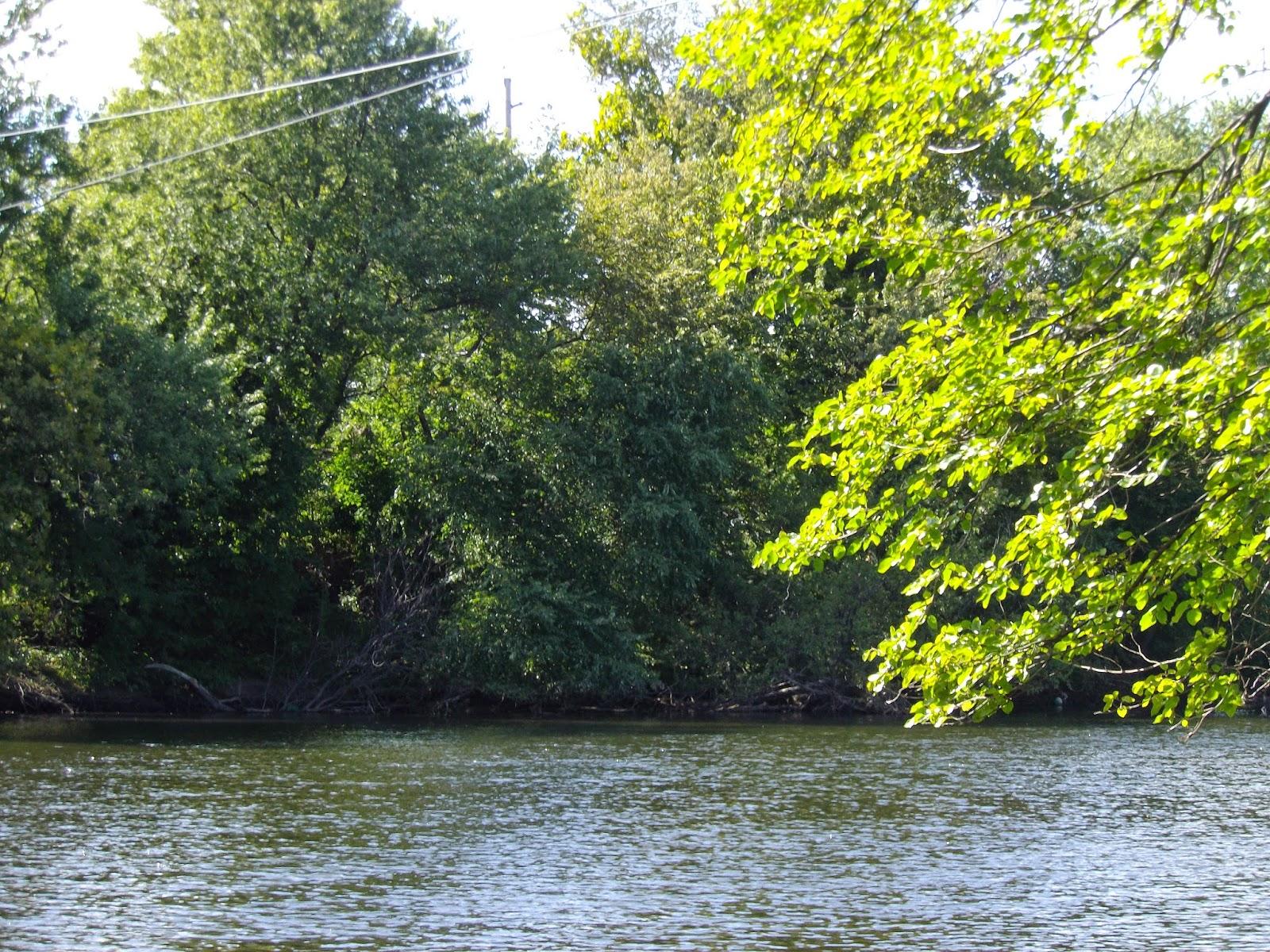 Passaic river at radburn new jersey the great lakes of nyc for Passaic river fishing