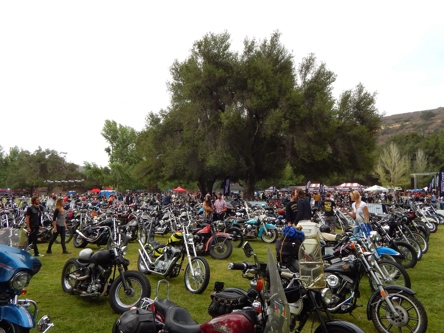 Born Free 6 Motorcycle Show Motorcycles