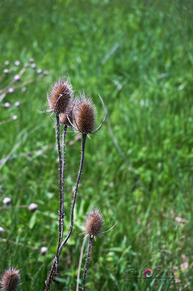 #Spring #Springgreen # SpringPhotography