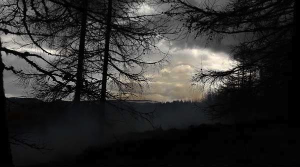 the fog, jillian mcdonald