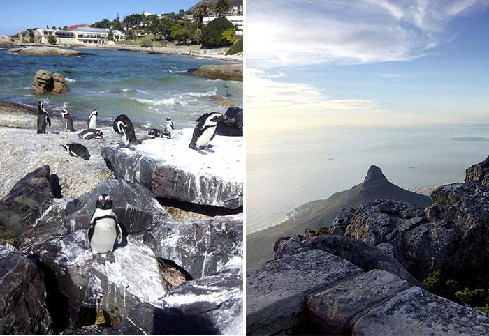 La Böcöque. Aventuras en Sudáfrica. pingüinos