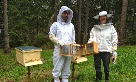 Celebrating Marriage & Honeybees  - honey bee