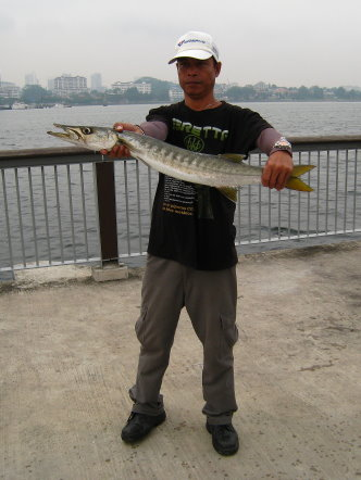 Yellowtail Barracuda [Sphyraena Flavicauda] also know as Saw Kun 沙君 [Hokkien] or Ikan Kacang [malay] weighing 3kg plus caught by Ah Ling at Woodland Jetty on 26th June 2013 using live Five-spot Herring or Assam fish (local), Selangat (malay) on float.