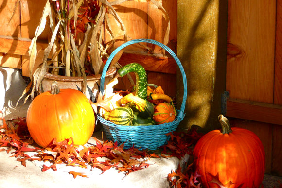 pumpkin, squash, corn stalks, fall color, autumn, decorations, jack o' lantern