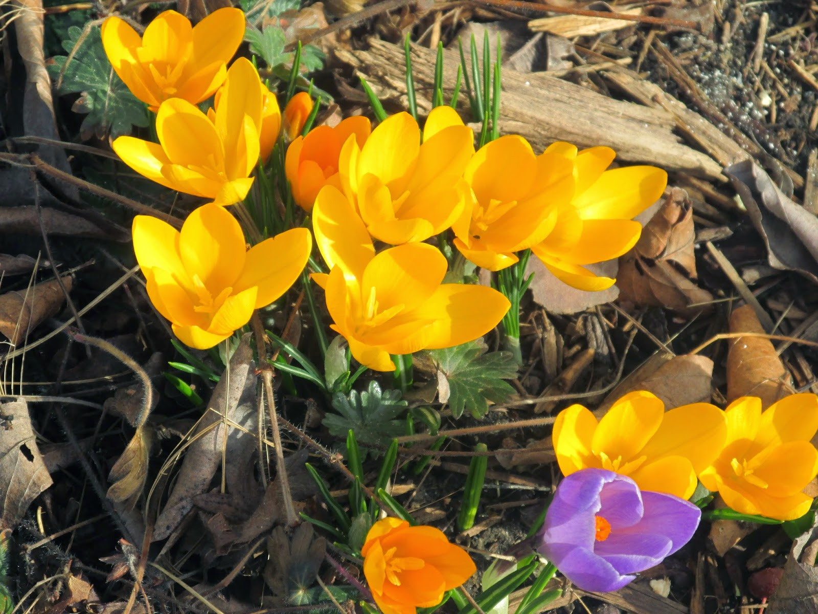 In the Garden:   Signs of Spring!