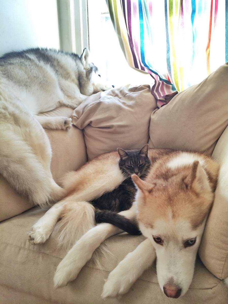 Funny animals of the week - 1 January 2016, funny animal photos, best animal pictures