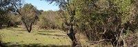 RECURSOS FORESTALES EN CORRIENTES ARGENTINA