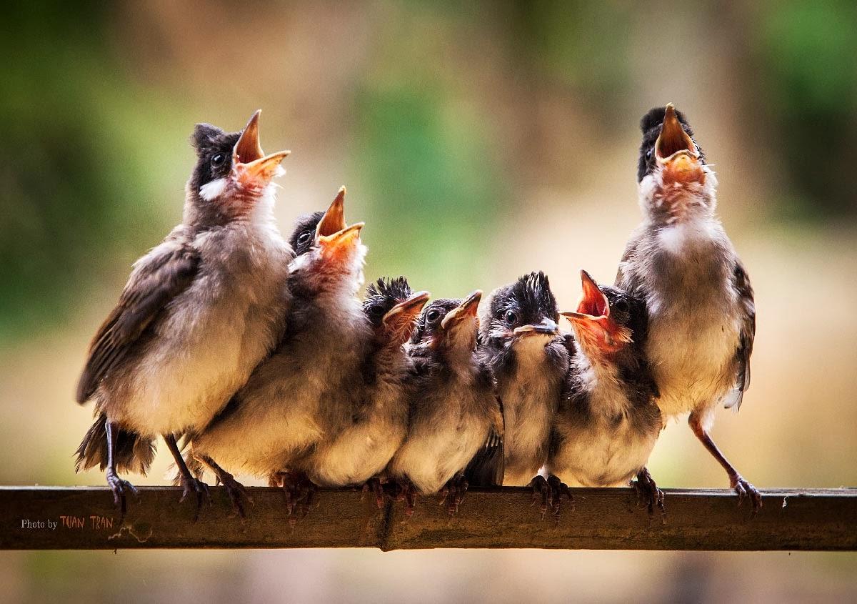 Wonderful Bird Choir | Content in a Cottage