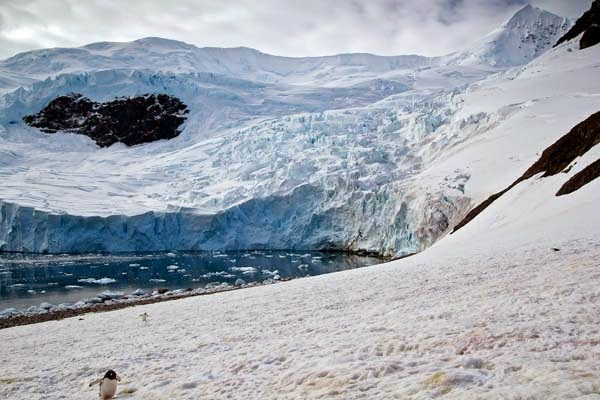 The penguins spotted him from a distance. - He Was Taking Photos Of A Glacier In Antarctica When Suddenly, Out Of Nowhere… WHOA!