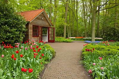 Banco de im genes plantas flores y jardines exuberantes for Jardines exteriores de casas de campo
