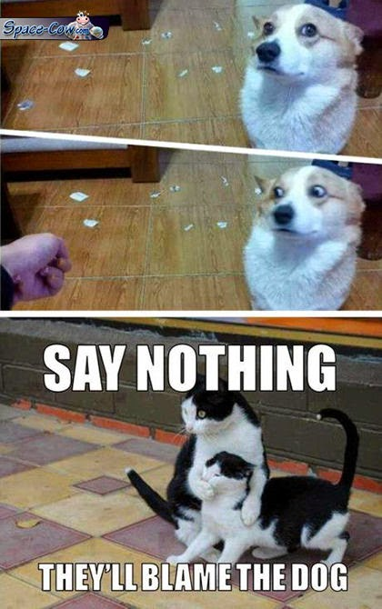 funny animals humor pics