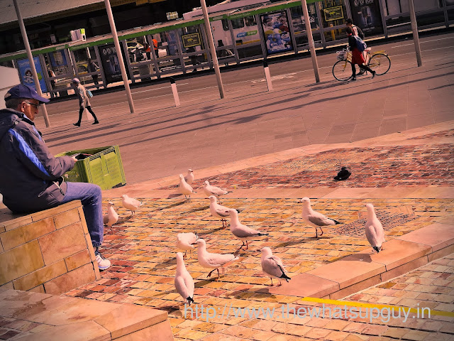 Man Feeding Birds in Federation Square Australia