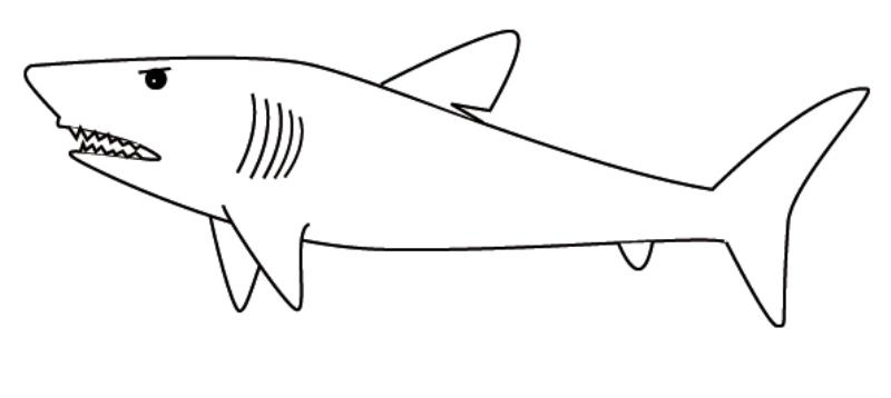Halaman belajar mewarnai gambar binatang ikan hiu