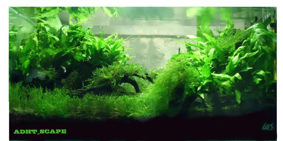 Aquascape jasa design aquascape - Design aquasacpe ...