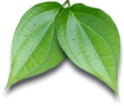 sejumlah khasiat dan manfaat daun sirih sebagai pengobatan alternatif