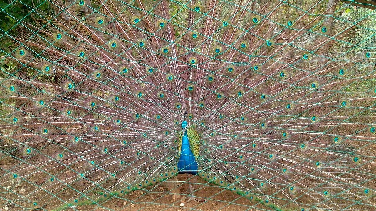 LAGATAW: Stirring Images: Beauty in Captivity