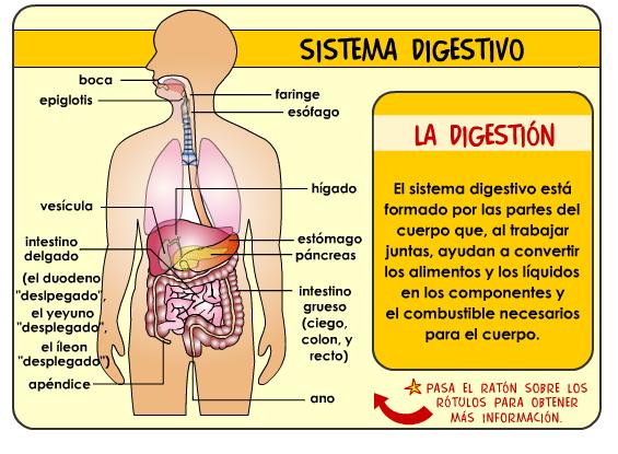 L sistema digestivo para niños - Imagui