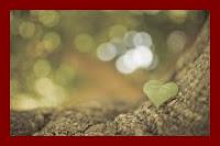 Vento nas folhas