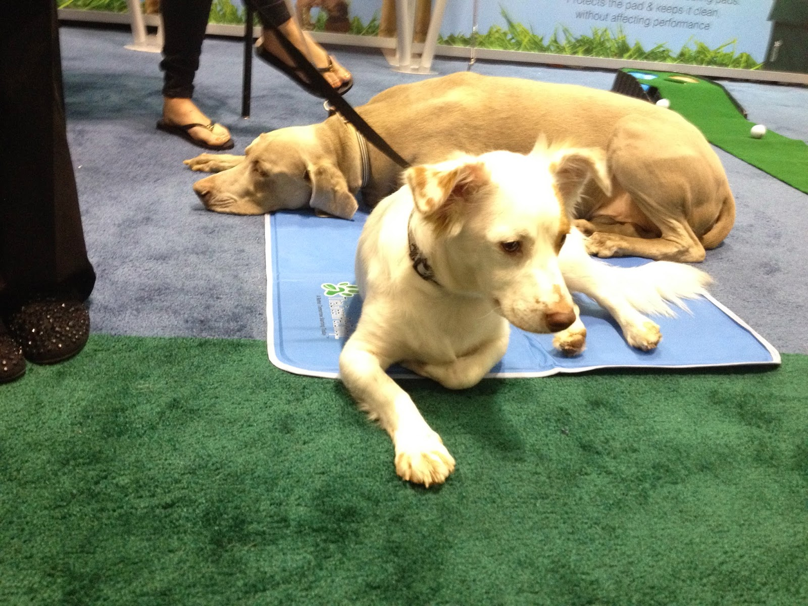 Life With Beagle: Global Pet Expo: If loving dogs is wrong, we don ...