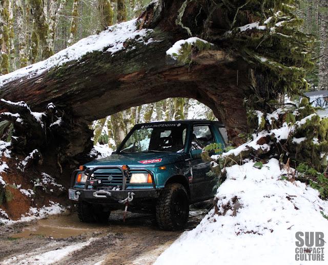 Cedar Tree Trail in Tillamook State Forest