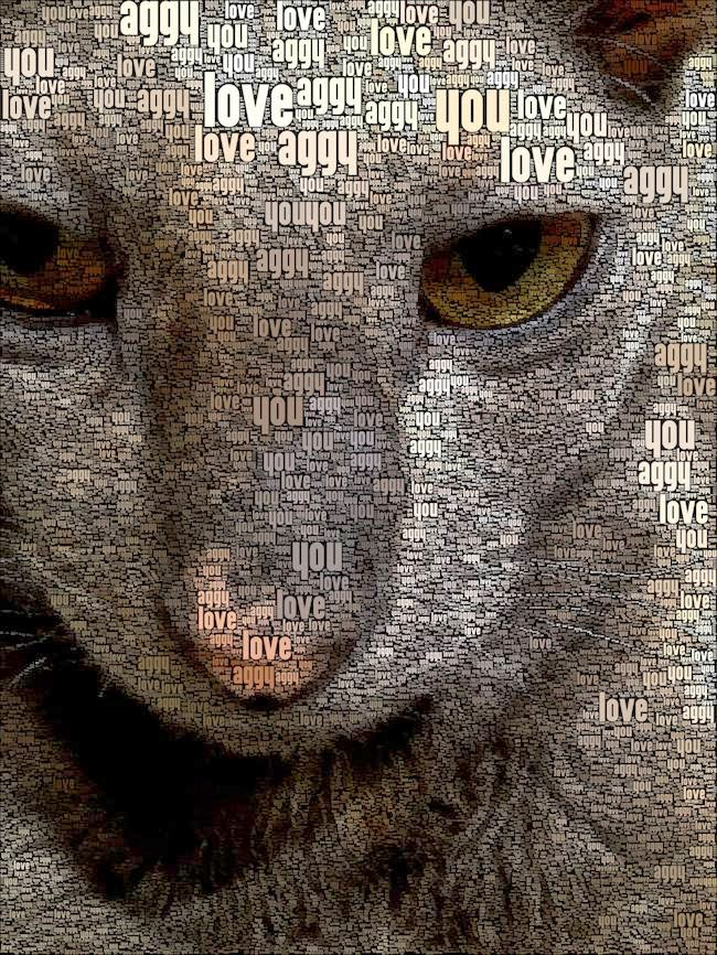 Cornish Rex Word Art