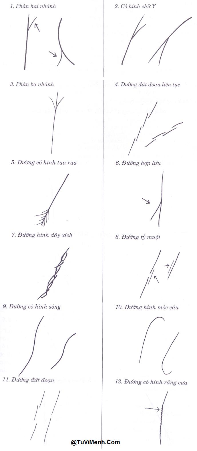 [Tướng Tay] - Các đường phân nhánh của chỉ tay