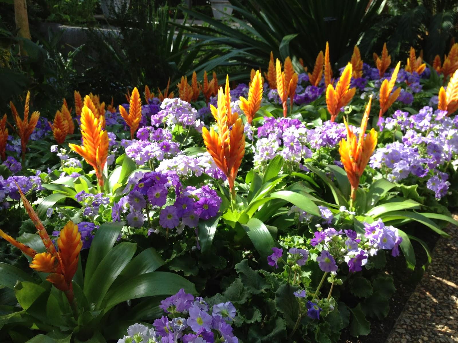 Longwood Gardens: Orchid Extravaganza