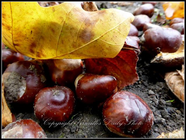 Chestnuts marrons Domaine de Mme Elisabeth Versailles