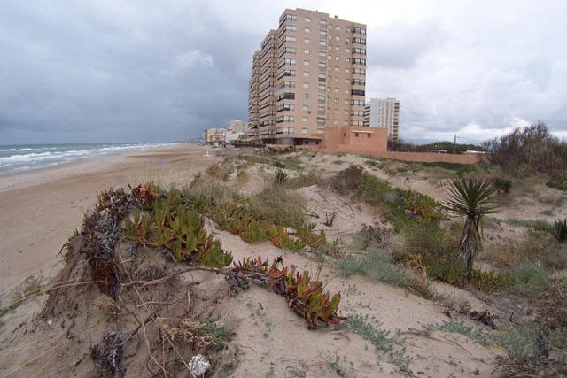 Crea tu jard n jardines costeros especies adecuadas for Crea tu jardin