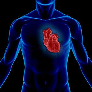 Jantung yakni salah satu organ terpenting yang berada dalam badan insan 10 Fakta Tentang Jantung Manusia
