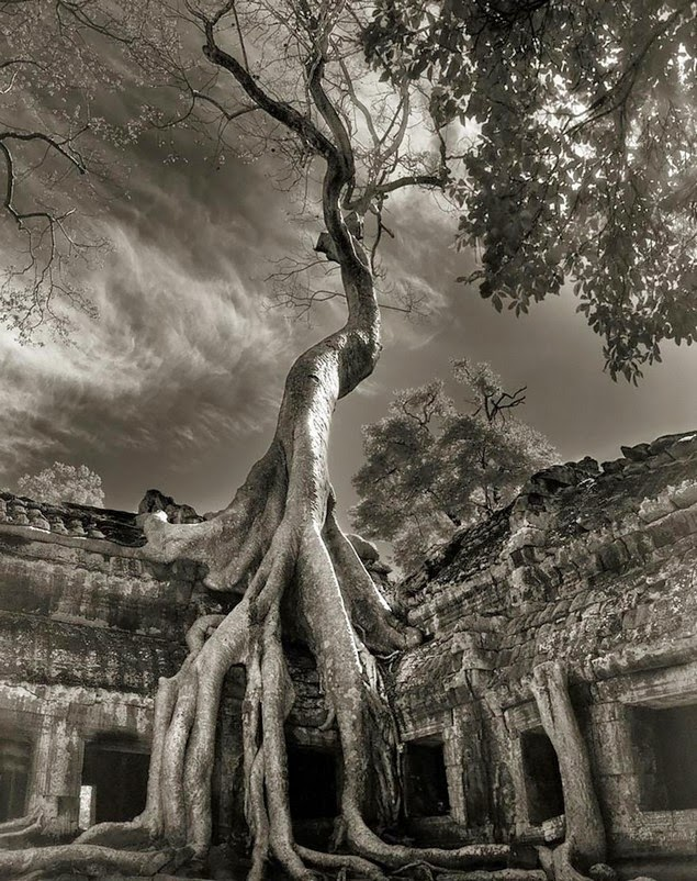 beth moon oldest living trees-13