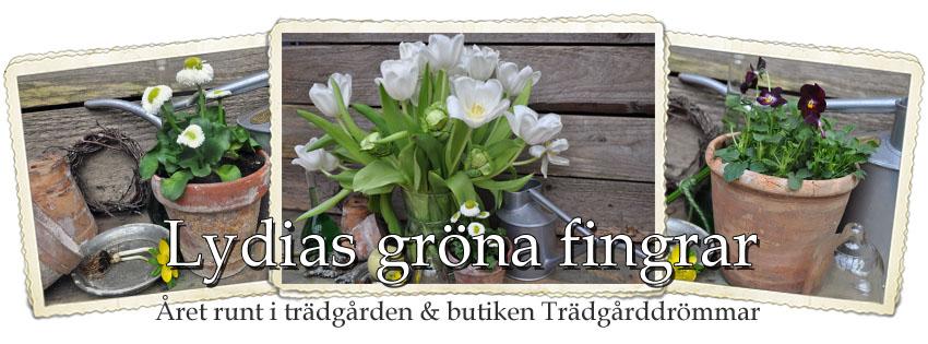 Lydias Gröna Fingrar