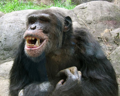 Chimp And Dog Tv Show