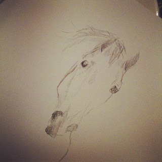 sketch of lusitano horse